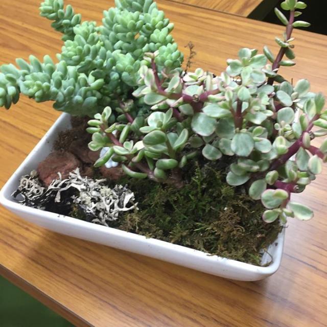 花蔵の三浦淳志先生をお迎えして多肉植物の寄せ植えワークショップを開催しました